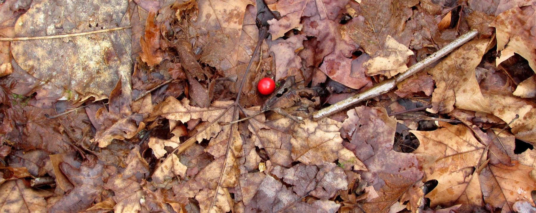 Hajas caidas en otoño