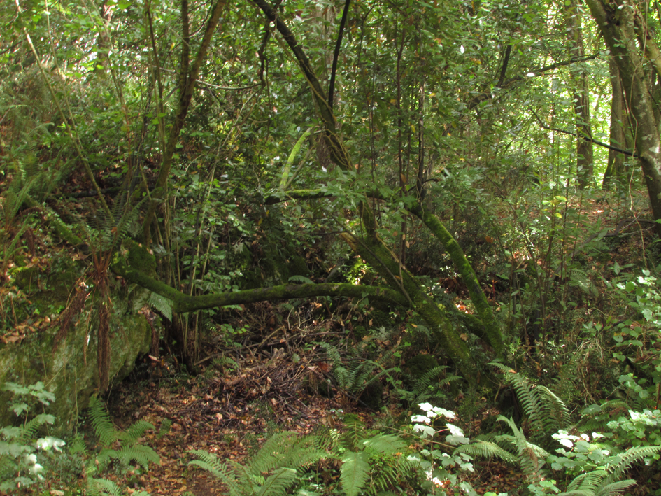 Formas caprichosas al abrigo del bosque