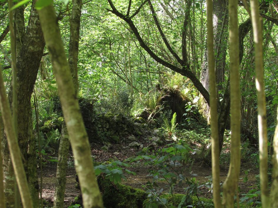 Rincones secretos en selva asturiana