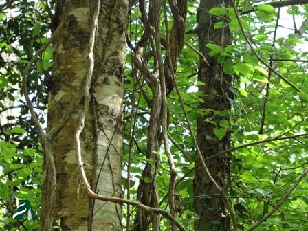 Sabes por qué es bueno que las hojas nos dejen ver el Bosque