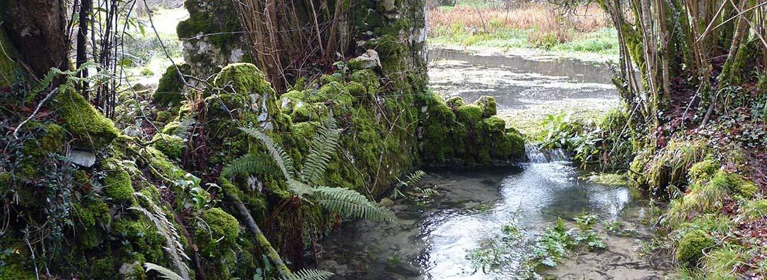 Riachuelo en Selva Asturiana