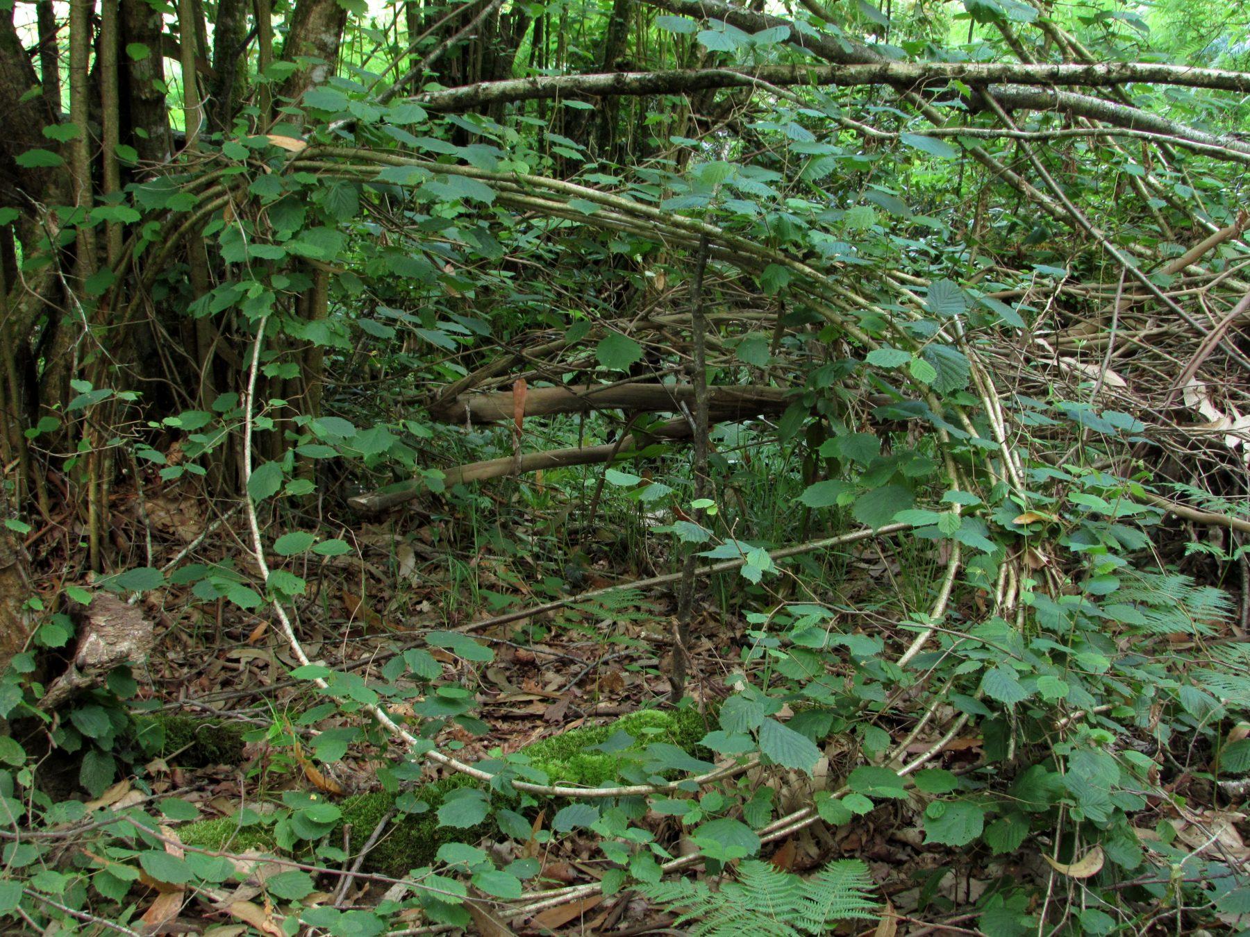 Un bosque encantadoramente misterioso