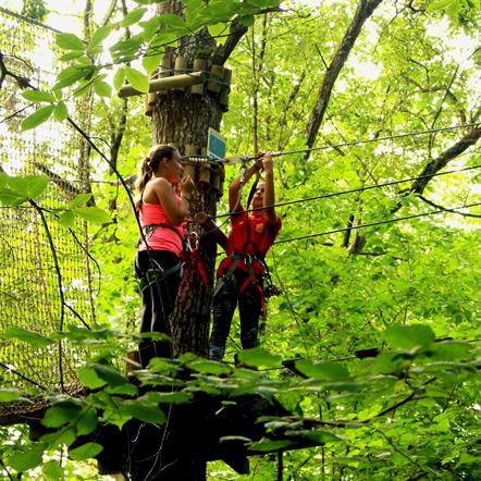 Chicas en un árbol preparando arneses